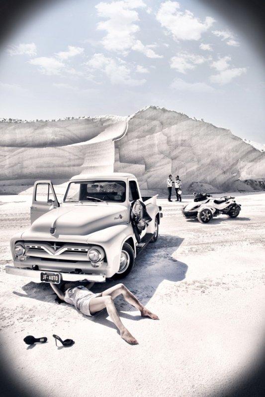 Photographe Dingo