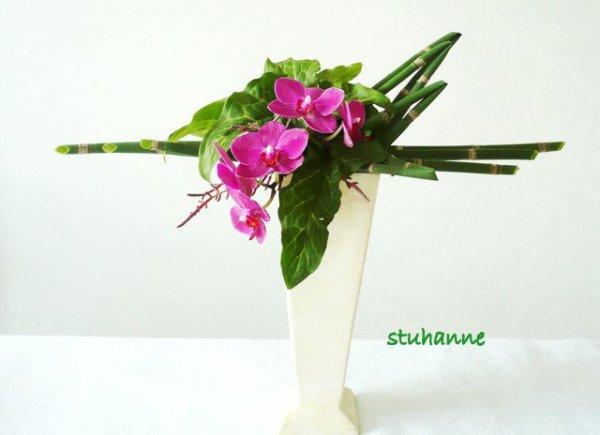 prèles et orchidée