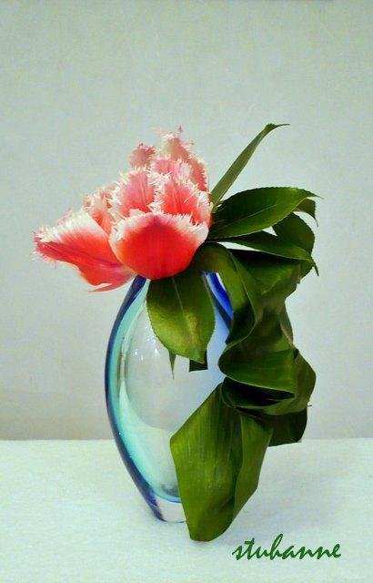 une seule tulipe