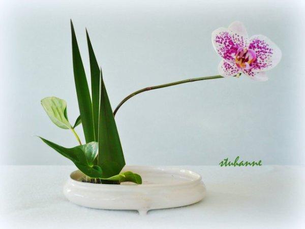 art floral,