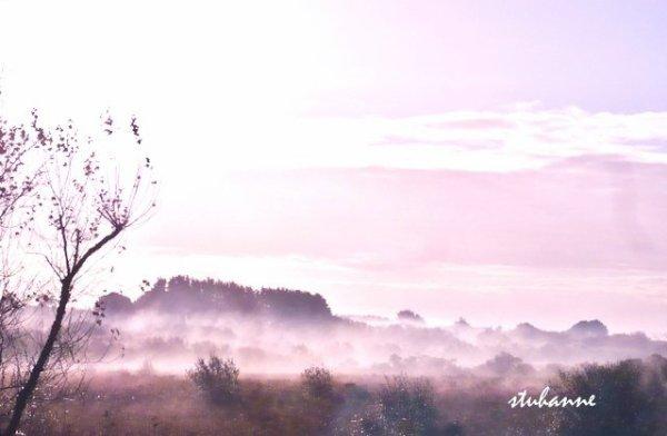 le brouillard se lève sur les marais de kerdual à la trinité sur mer