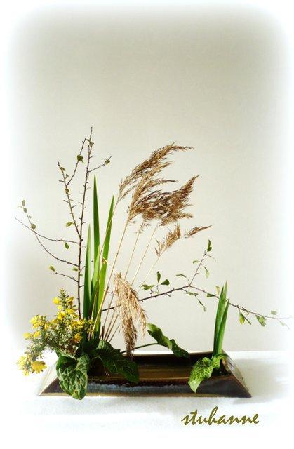 ikebana: en passant par les marais