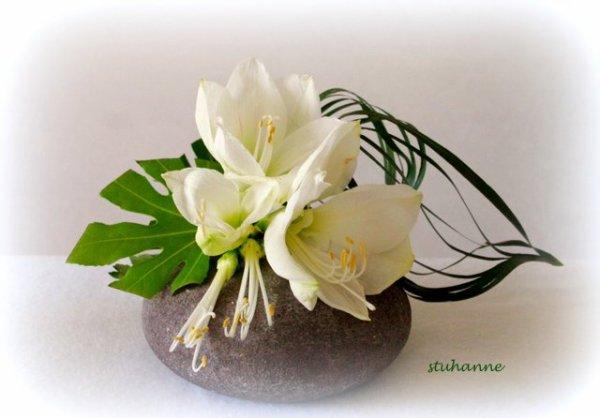Il me restait quelques fleurons d 39 amaryllis art floral for Amaryllis pour noel