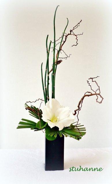 deux fleurons d'amaryllis