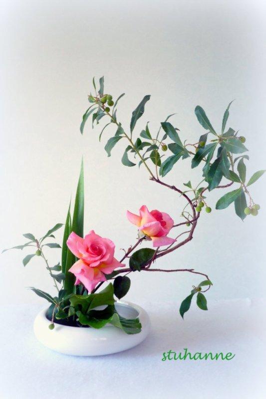 """Roses """"belle de londres"""""""