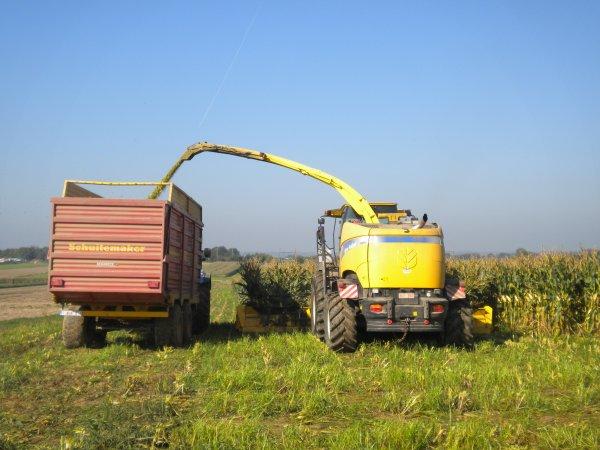 maïs 2011 Herens