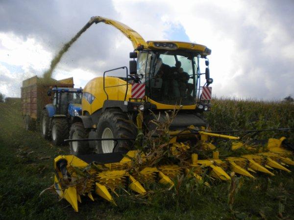 ensilage de maïs 2012 HERENS
