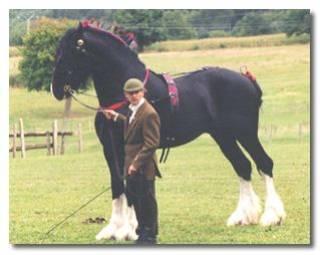 le plus grand cheval du monde neneche. Black Bedroom Furniture Sets. Home Design Ideas