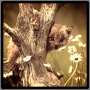 Photo de Felidae