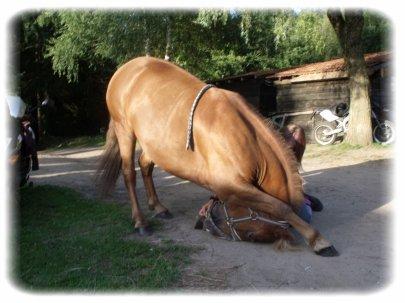 """"""" Un cheval sans cavalier reste un cheval alors qu'un cavalier sans cheval n'est rien."""""""