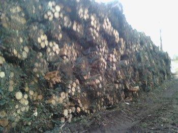 chantier a forestier propieres