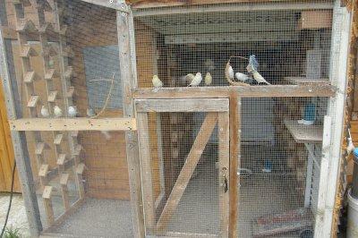 la voilà en entier, car cette année plus d'oiseaux, il faut ce qu'il faut.