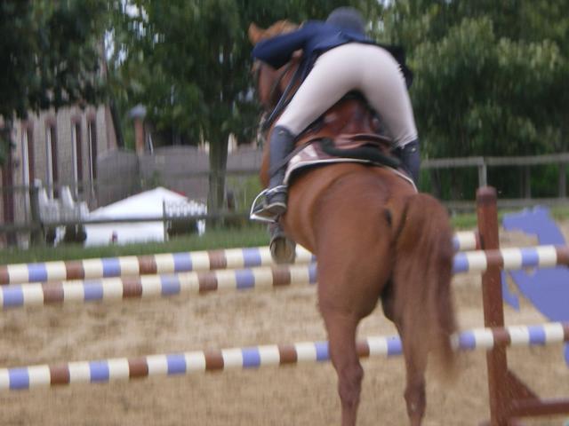 Ma vie, mes chevaux ....