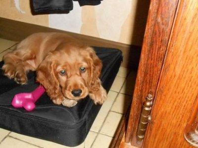 Sally et la valise pour pc
