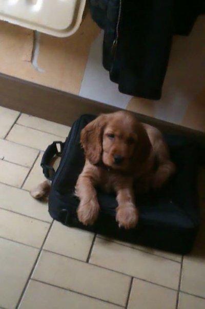 La valise panier