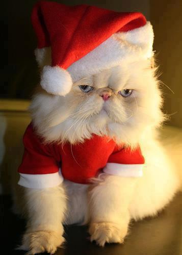 Bons  préparatif de Noël