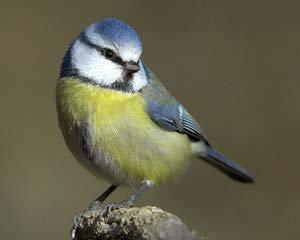 Si j'étais un oiseau