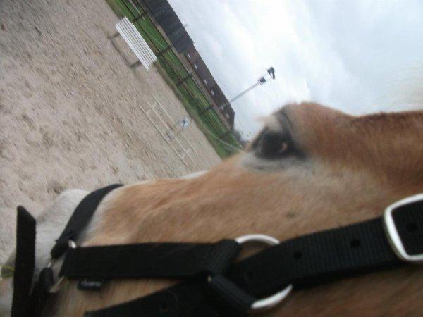 Exercice a pieds, en carriere avec Kiki au licols :)