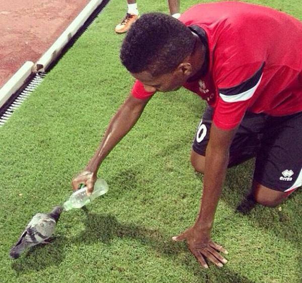 un joueur donne a boire a un pigeon