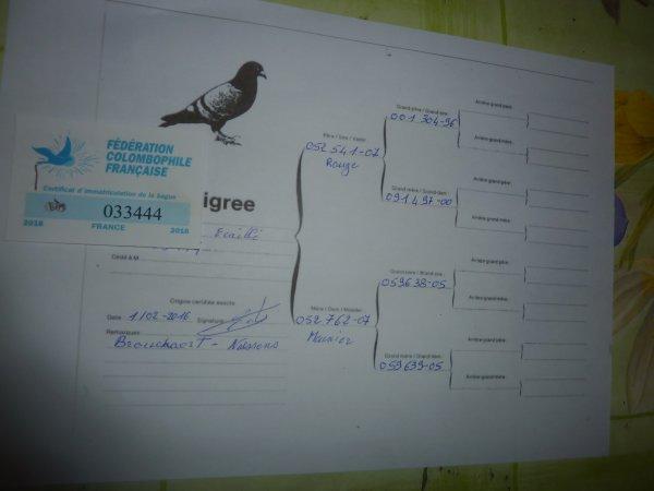 pigeon pour  le championat des regions 2016