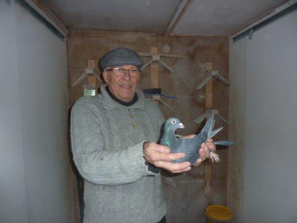 colombierdu nord nouveaux pigeons