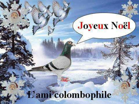 joyeux noel a tous les colombophiles et leur familles