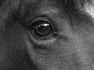 petite seance photo de mon cheval