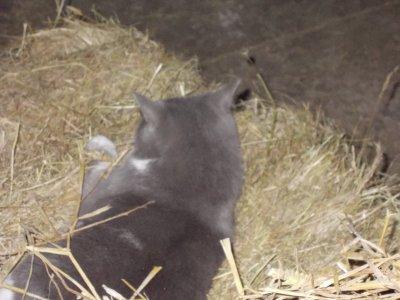 le chat du centre equestre