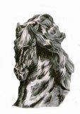 Photo de I-Gotta-Horses