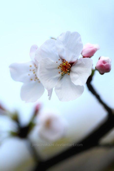 Blog de sakura-chan2010
