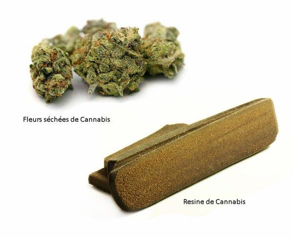 Suite : Utilisation récréative (Les formes du Cannabis)