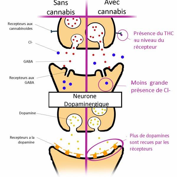 Partie I, Sous-partie 2 : Utilisations Pharmaceutiques