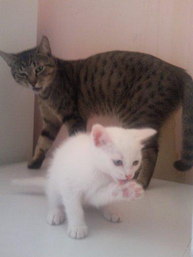 monsieur le chat qui ricane sur mademoiselle blanche et elle qui lui gueule dessus