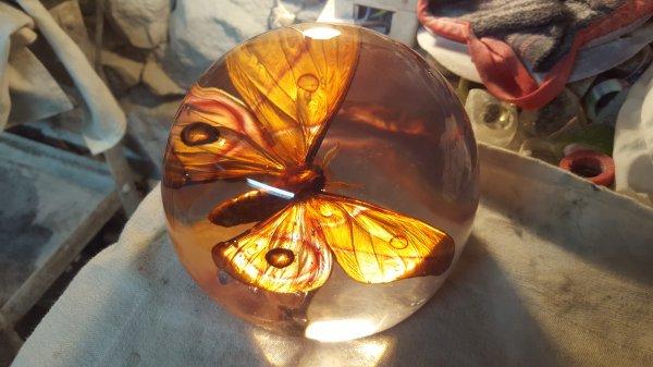"""incusion de papillon""""antherina suraka"""""""