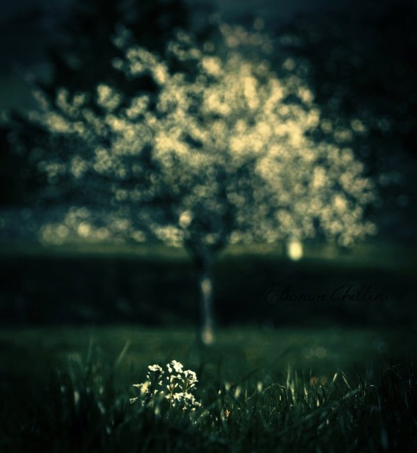 Likee-Photography