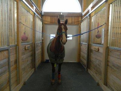 Le meilleur cheval n'est pas celui qui t'as mené où tu voulais alors que tu étais en selle, mais celui qui a fais voyager ton coeur alors que tu l'écoutais respiré.