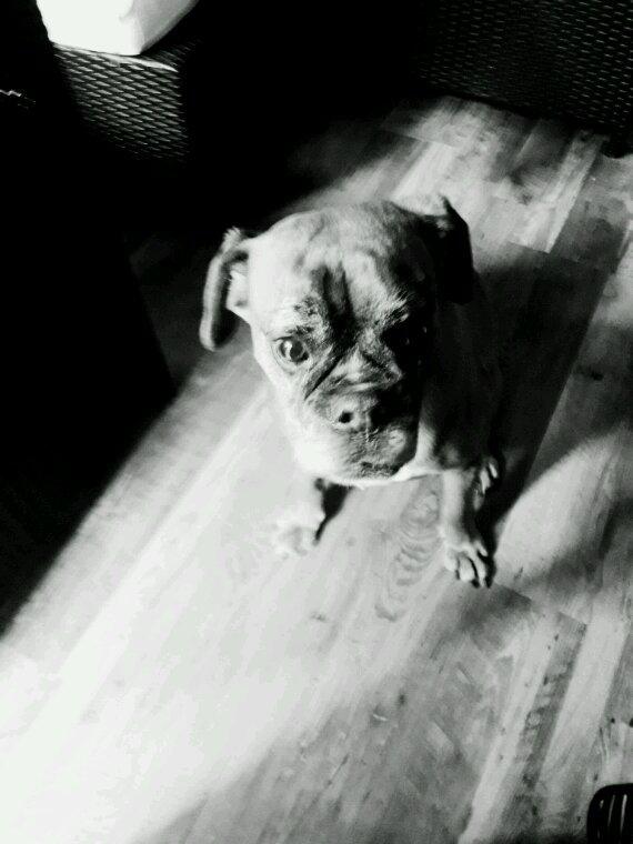 Chrystale  (Notre chien)