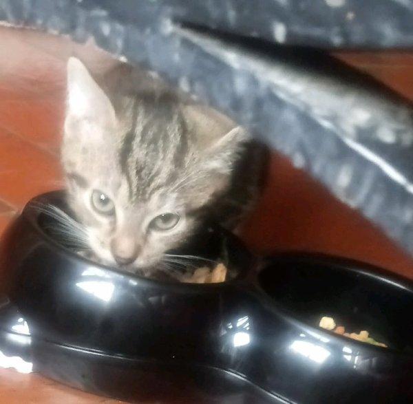 Gribouille (mon chat)