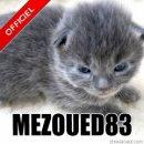Photo de mezoued83