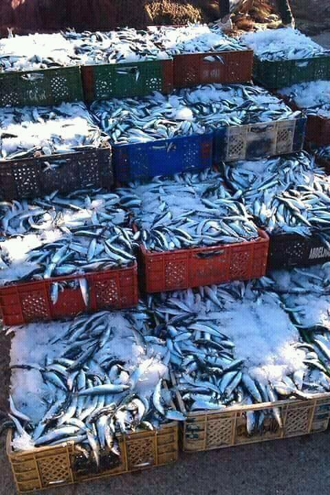 Les economis de ma ville poisson
