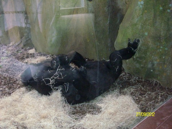 Zoo 'Amnéville
