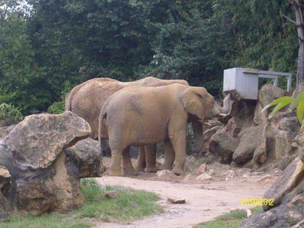 Zoo d'Amnéville, septembre 2012