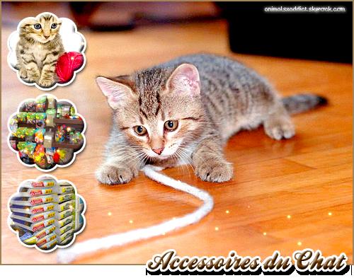 Accessoires du...chat ! ♥