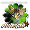 Animalsxaddict