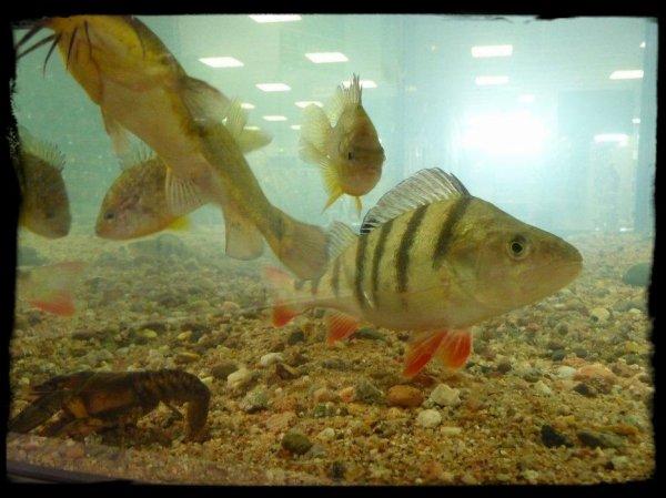 photo morvan pêche
