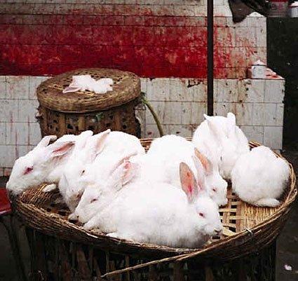 désolé dpauvres petits lapins !!!!!! Je dis encore NON !!