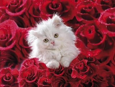 Signification des roses la voix d 39 un ange - Signification des roses rouges ...