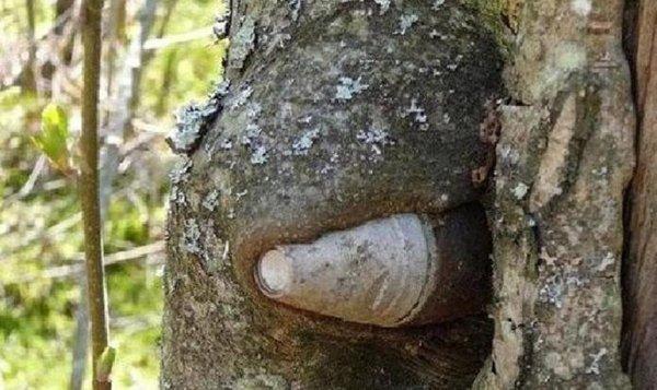 petites surprises en pleine nature