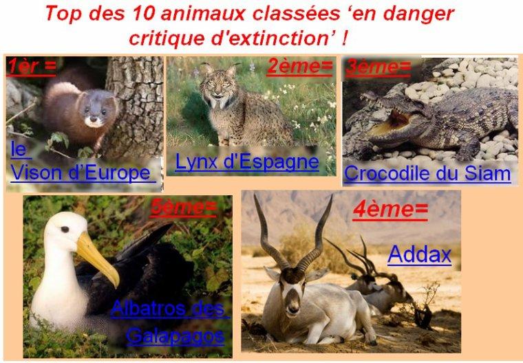 Top 10 des animaux classées 'en danger ritique d'extinction' !