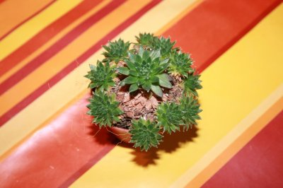 Blog de nicolas5273 blog de nicolas5273 for Vive le jardin 85180